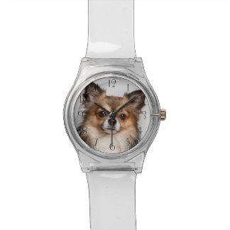 Stunning chihuahua portrait watch
