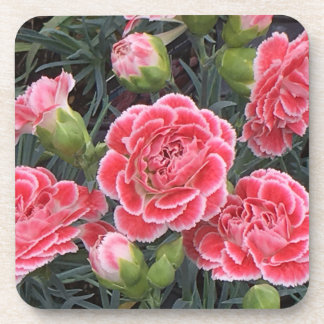 Stunning Dianthus Coaster
