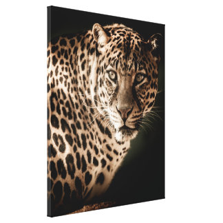 Stunning leopard on black background canvas print