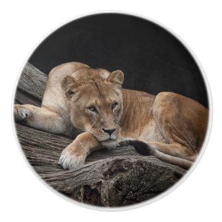 Stunning lioness ceramic knob