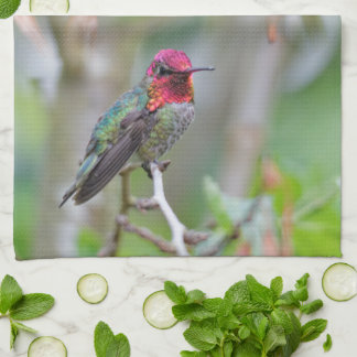 Stunning Male Anna's Hummingbird on the Plum Tree Tea Towel
