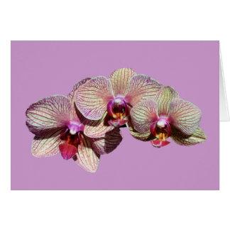 Stunning Orchids Trio Flower Card