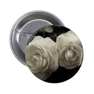 Stunning pale cream roses print pins