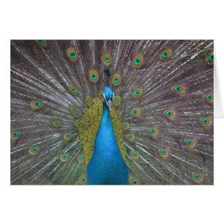 Stunning Peacock Card