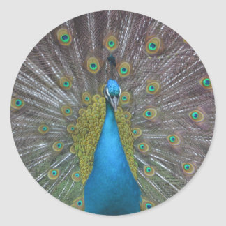 Stunning Peacock Classic Round Sticker
