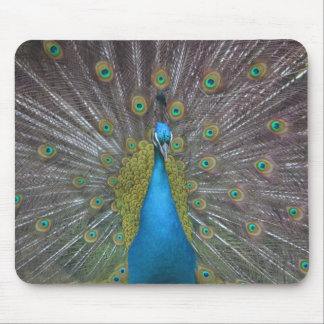 Stunning Peacock Mouse Pad