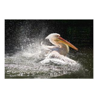 Stunning pelican in water photo print