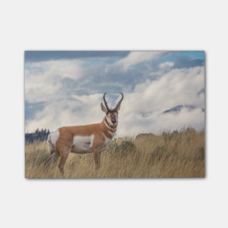 Stunning Pronghorn Post-it Notes
