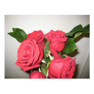 Stunning Red Roses Postcard