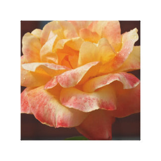 Stunning Rose Stretched Canvas Print