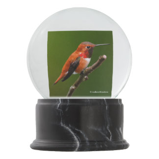 Stunning Rufous Hummingbird on the Cherry Tree Snow Globe