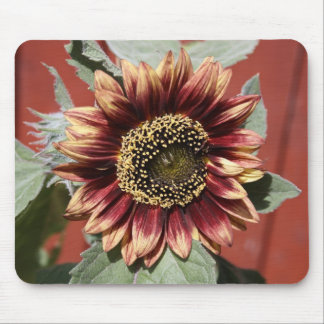 stunning sunflower mouse pad
