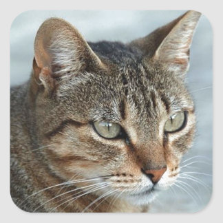 Stunning Tabby Cat Close Up Portrait Square Sticker