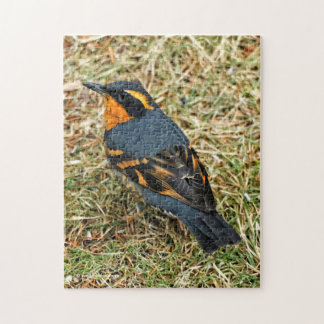 Stunning Varied Thrush on the Lawn Jigsaw Puzzle