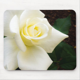 Stunning white rose mouse pad