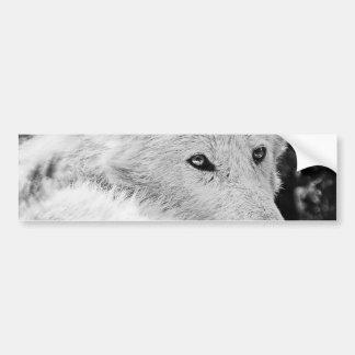 Stunning White Wolf Bumper Sticker