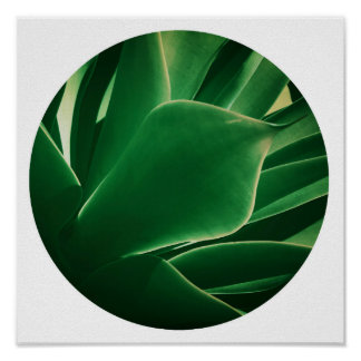 Stylish Bright Green Plant Succulent Poster