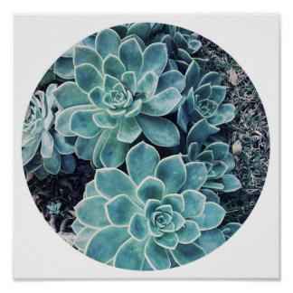 Stylish Pale Green Cactus Succulent Poster