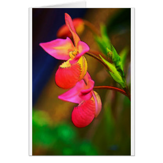 Stylized Phragmipedium Orchid Flower Duo Card