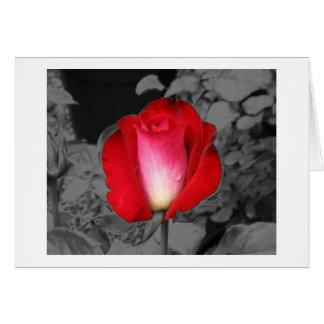 Stylized Rose Greeting Card