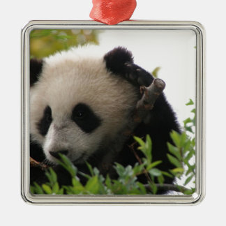 Su Lin, giant panda bear cub at the San Diego Zoo Metal Ornament
