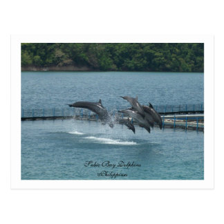 Subic Bay Dolphins, Philippine Postcard