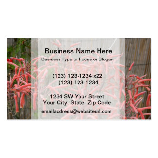 succulent aloe flowers pink neat flower photo business card