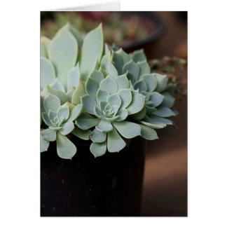 Succulent blank card