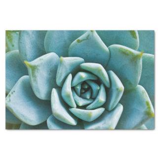 """Succulent Closeup 10"""" X 15"""" Tissue Paper"""
