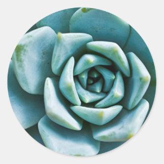 Succulent Closeup Classic Round Sticker