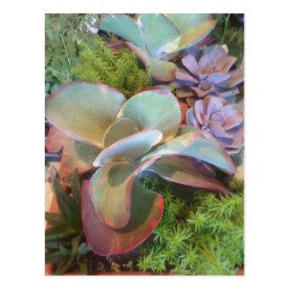 Succulent Container Garden postcard