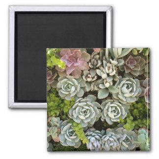 Succulent Garden 1 Magnet
