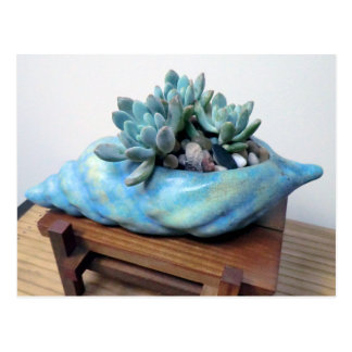 Succulent in Seashell by The Perfect Plant Postcard