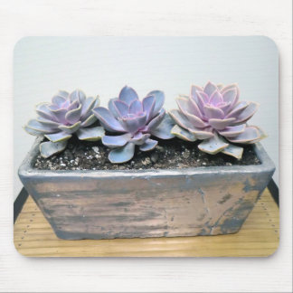 Succulent in Silver Mouse Pad