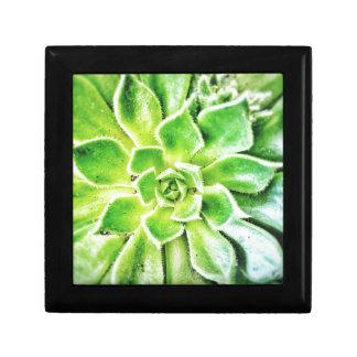 Succulent Jewellery/Gift Box
