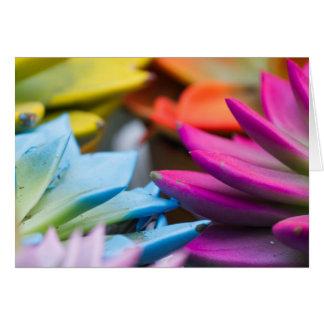succulent plant card