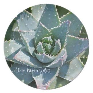Succulent plant dinner plate: Aloe brevifolia Plate