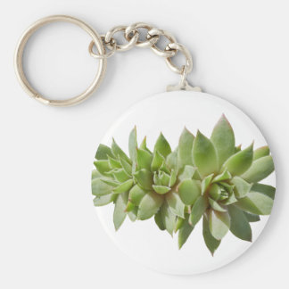 succulent plant in the garden key ring