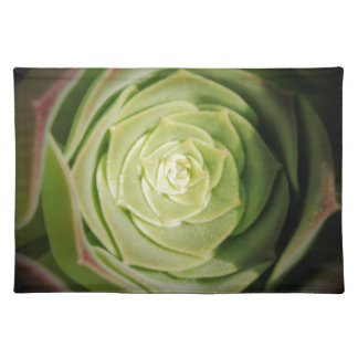 succulent plant placemats
