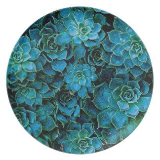 Succulent Plants Plate