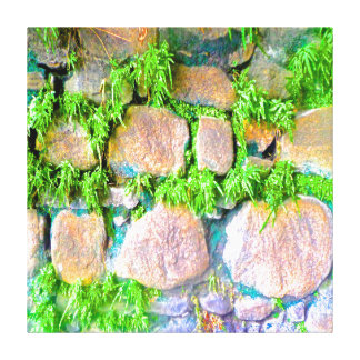 Succulent Rock Wall Stretched Canvas Print