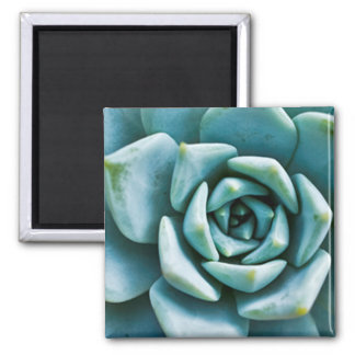 Succulent Square Magnet