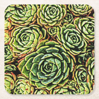 Succulents Coaster