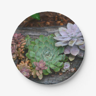 Succulents On Driftwood Paper Plate 7 Inch Paper Plate