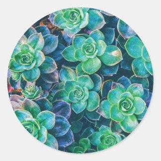 Succulents, Succulent, Cactus, Cacti, Green, Plant Classic Round Sticker