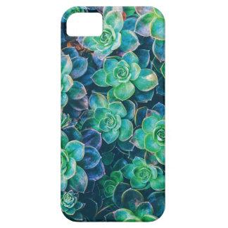 Succulents, Succulent, Cactus, Cacti, Green, Plant iPhone 5 Case