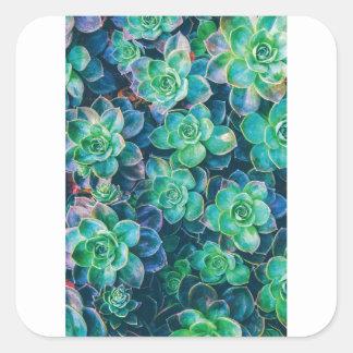 Succulents, Succulent, Cactus, Cacti, Green, Plant Square Sticker