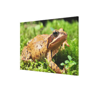 Such A Lovely Frog Canvas Print