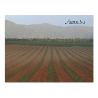 Sugar Cane Fields --- Queensland, Australia Postcard