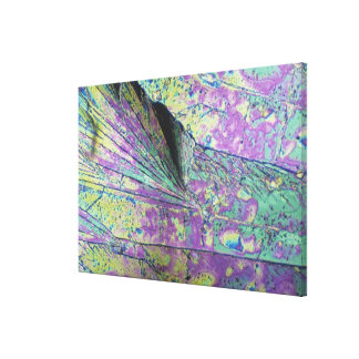 Sugar Crystals Viewed in Polarized Light Gallery Wrapped Canvas